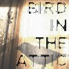 Bird in the Attic